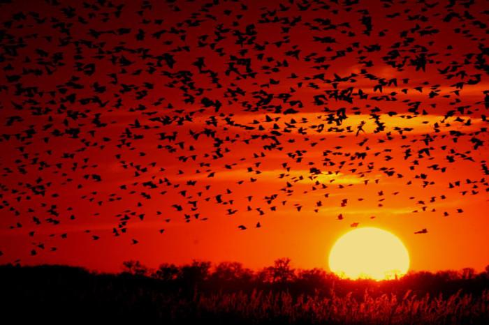 13.) Quivira National Wildlife Refuge
