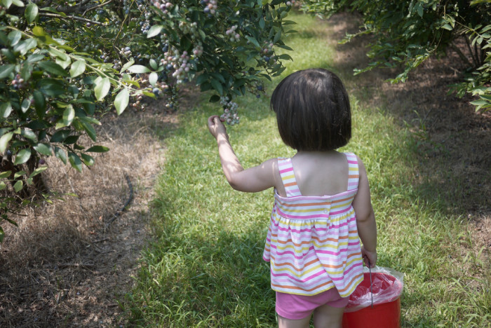 8) Hand Pick Your Own Blueberries