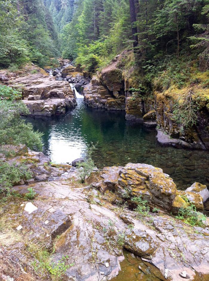 8) Brice Creek, near Eugene