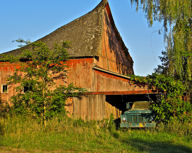 13) Old barn, slowly returning to nature in Clinton
