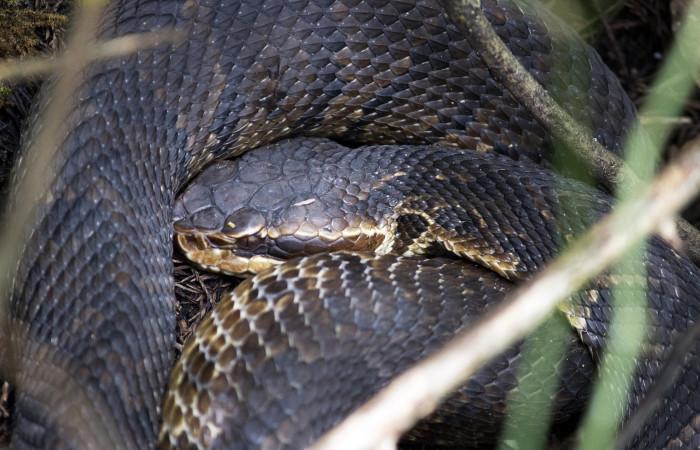 9) Snake - SNAKE!!
