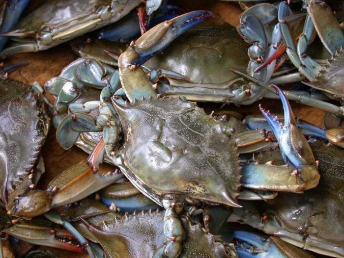 4) Go Crabbing on the Coast