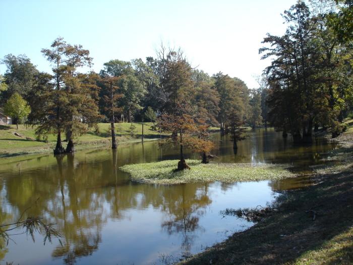 7. Swimming in a Creek