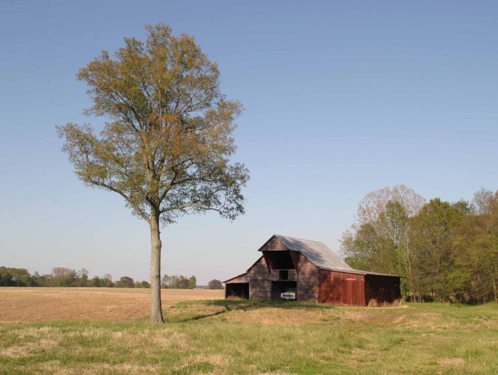 13) Barns with trees
