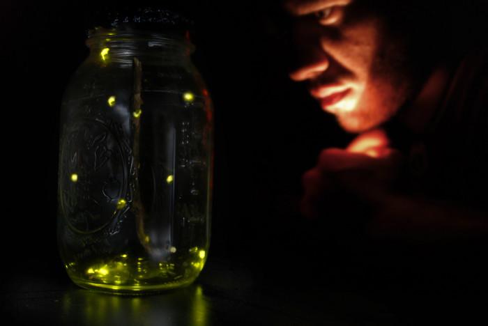 23. Fireflies.