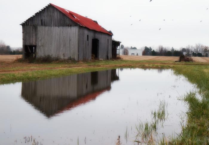 11. A Fredericksburg Barn after the Rain