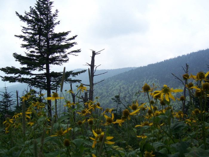 6) Great Smoky Mountains