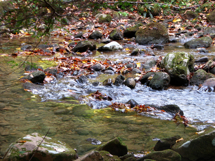 11) A most lovely gurgling creek