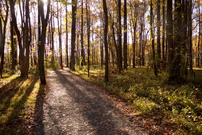 4. Spend the day at Huntley Meadows in Fairfax