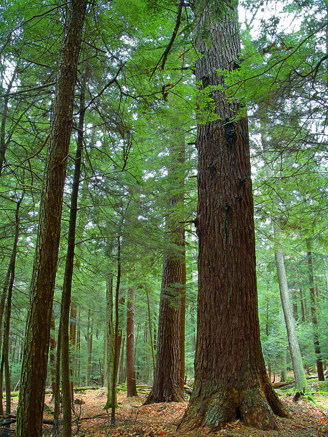4. Cook Forest State Park, Clarion County