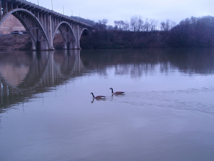 10) The Henley Street Bridge? Looks like animals AND humans are fans.