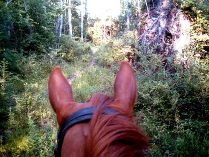2) Travel on Horseback Down Tammany Trace