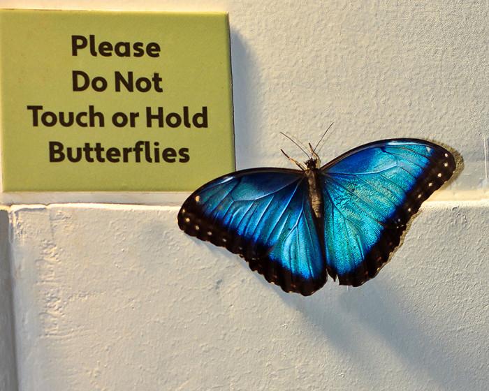 1) Audubon Insectarium, New Orleans, LA
