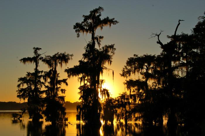 10) Sun drifting down through Cypress and Spanish Moss.