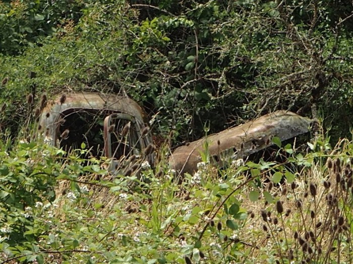 8) Old pickup buried in the bushes