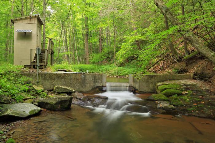 16. Little Back Creek, Bath (George Washington National Forest)