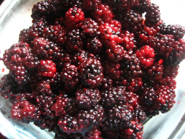 7) Marionberry