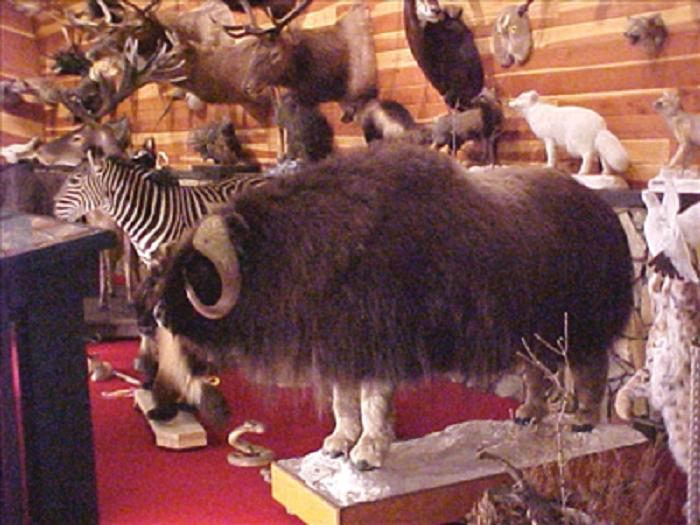 10. Pfennig Wildlife Museum - Beulah, ND