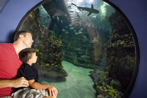 3. Take Dad to see some sea creatures...from the safety of behind glass at the NC Aquarium at Fort Fisher