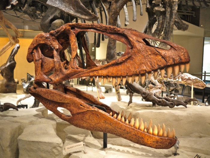 6. The First Dinosaur Skeleton In North America Was Found Here.