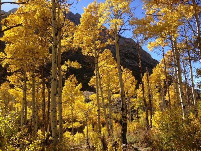 4. Lamoille Canyon