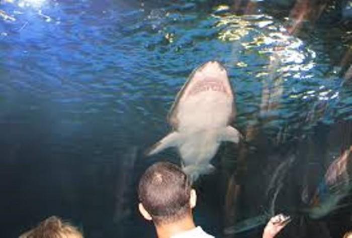 6. Newport Aquarium