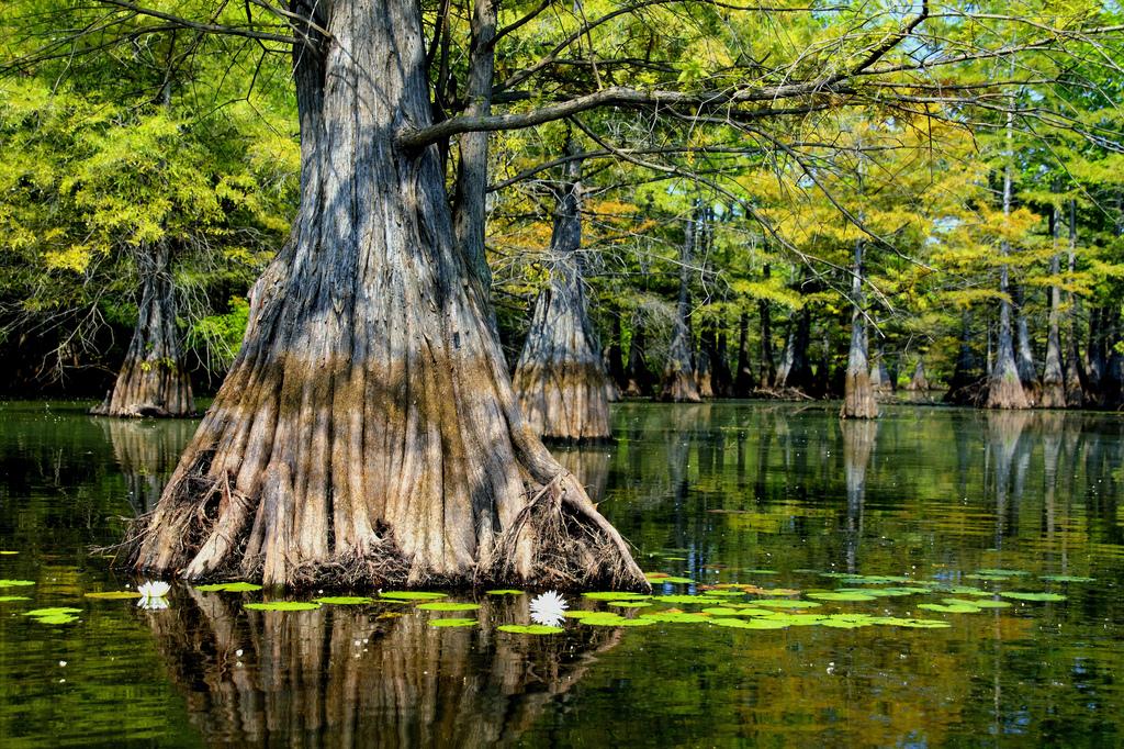 Swamp Tours Hammond La
