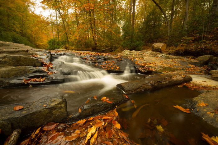 19. Take a hike through Prince William Forest Park in Prince William County