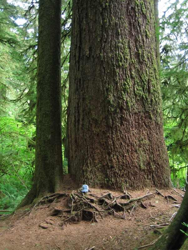 10) Valley of the Giants,Oregon Coast Range in Northwest Oregon