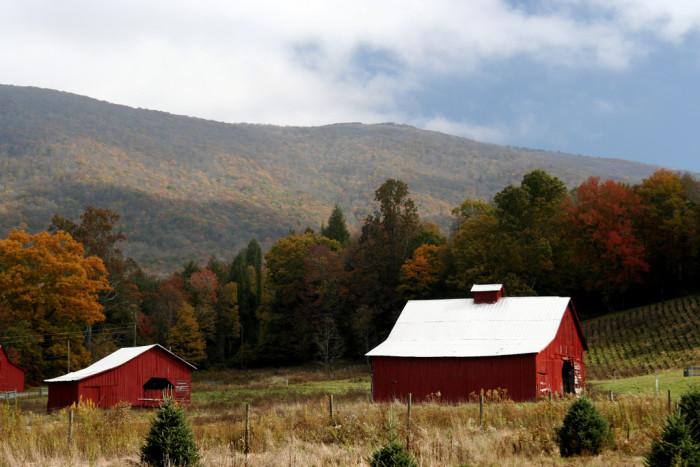 13. Red Barns Along the Virginia Creeper Trail