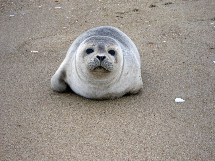 1. Seal Pup at Back Bay National Wildlife Refuge, Virginia Beach