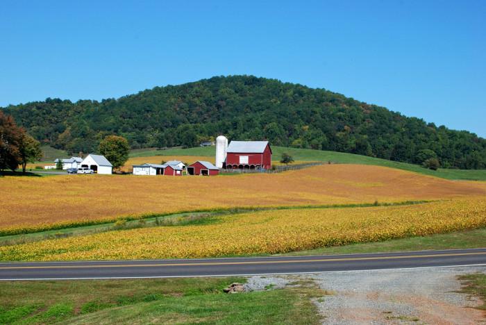 23. Shenandoah Farm Scene, Wolftown