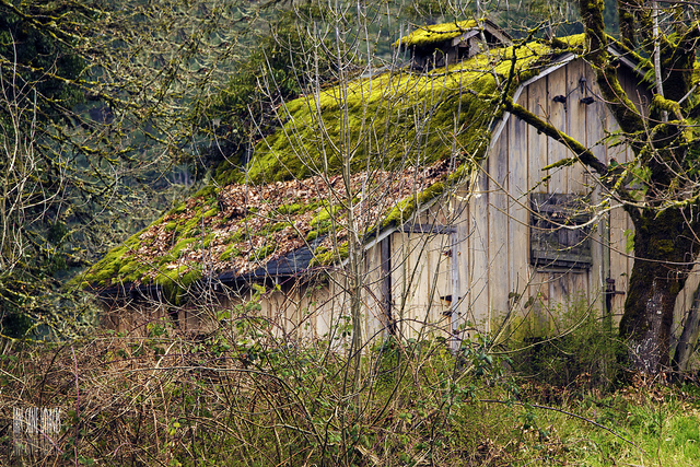 2) Moss-covered, old barn in Silverton, Oregon