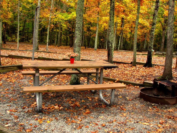 Staunton River State Park table
