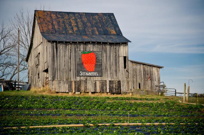 15. Strawberry Barn, Nelson County