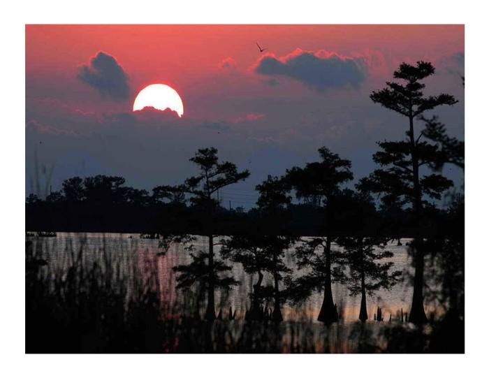 2) Sinking pink sun over swamp.