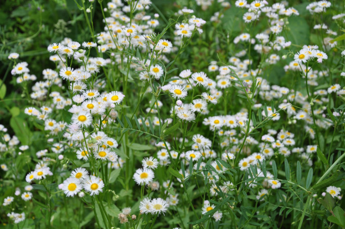 11) Or catch an eyeful of wildflowers wherever you are