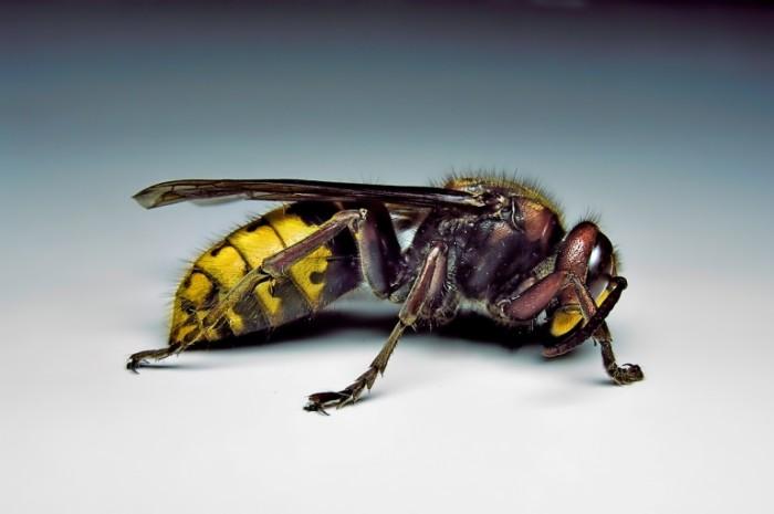 4. The Hornet