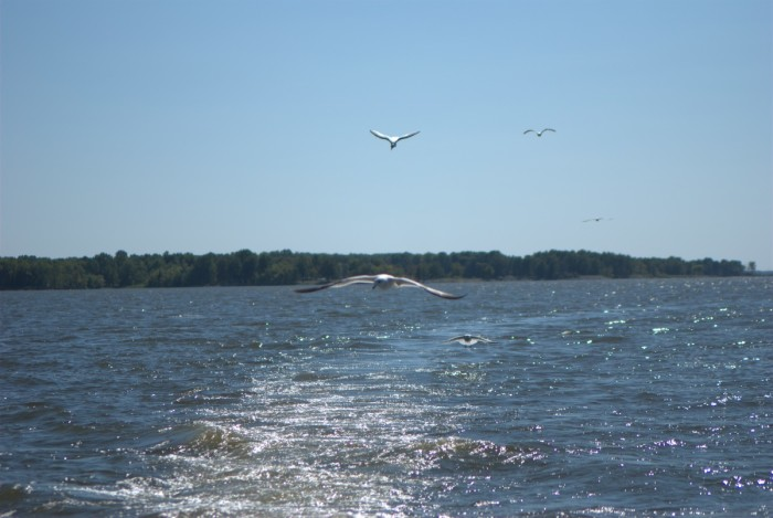 14 of the most naturally beautiful lakes in illinois for Rend lake fishing