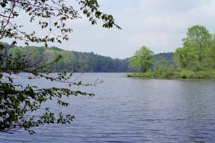 8. Little Grassy Lake (Jackson and Williamson County)