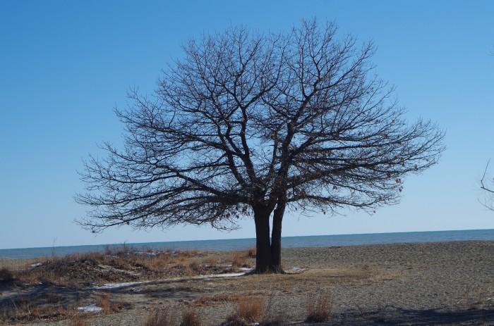 6. Illinois Beach State Park (Zion)