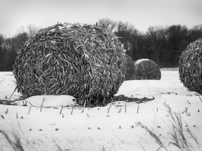 12. Can't get enough of these baled cornstalks in snow.