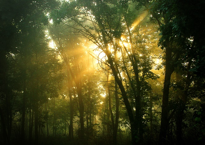 9. The only thing that would make this picture look more magical is fairy dust. This sunburst was captured at Burnridge Forest Preserve (Gilberts).