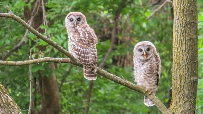 16 Nature Photos Of Nebraska S Bountiful Wildlife