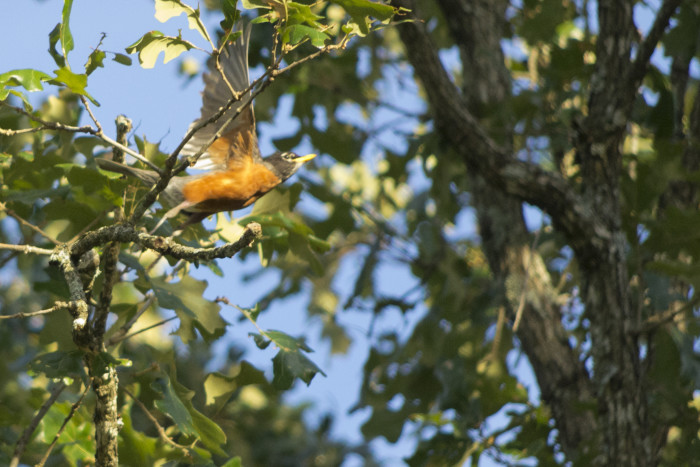 11. Batesville Bird