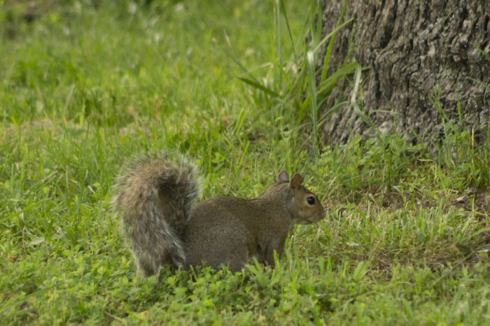 7. Squirrel in the Grass