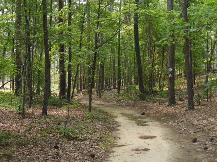 6. Cheraw State Park, 100 State Park RD Cheraw,SC 29520 Phone: (843) 537-9656