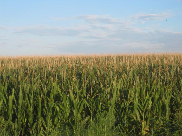 1) It's All Cornfields