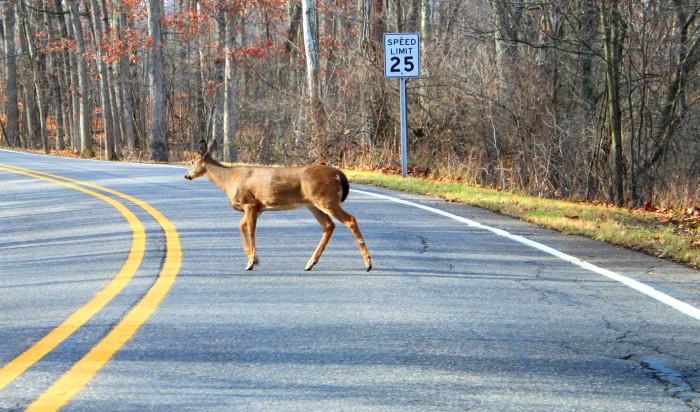 8) Suicidal (or Sadistic) Deer