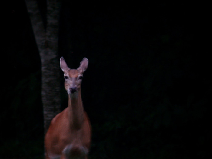 9) There's something strangely mysterious about this placid doe.